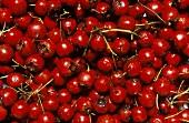 Several Hawthorn Berries