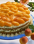 Apricot cream gateau