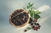 Fresh Blackberries in a Basket