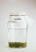 Mung Beans Soaking in a Glass Jar; Mung Bean Sprouts