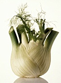 One Fennel Bulb