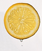 Slice of Lemon with Juice Drop