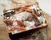 Assorted Sea Fish and Crayfish on Ice; Wooden Box