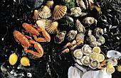 Seafood Still Life; Lobster and Shellfish