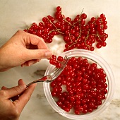 Redcurrants being stripped from the stalks with a fork