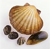 Jakobsmuschel, Venusmuscheln & Miesmuschel