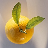 An orange with two leaves from above