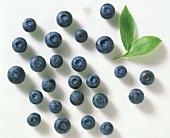 Many Blueberries; Leaf