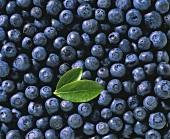 Several Fresh Blueberries; Blueberry Leaf