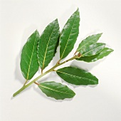 A sprig of bay with fresh bay leaves