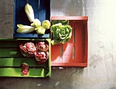 Assorted Lettuce Heads in Colorful Crates