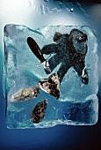 Austern, Austernmesser & Austernhandschuh im Eisblock