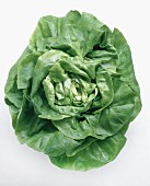 One Head of Butterhead Lettuce