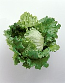 Head of Iceburg Lettuce