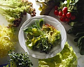 Assorted Types of Lettuce in a Bowl