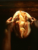 Hands Pulling Apart a Loaf of Bread