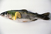 Fresh Salmon Trout with Lemon and Dill