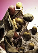 Assorted Potatoes Falling From a Burlap Bag