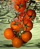 Vine Ripened Tomatoes in Water