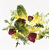 Arrangement of assorted salad leaves on sheet of glass