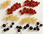Red Black and White Currants