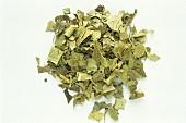 A heap of holly herb (Ilex aquilifolium)
