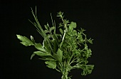 Herb bouquet against black backdrop