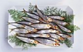 Several sprats with dill on white platter