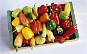 Many different types of pepper in a wooden box