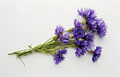 A bunch of cornflowers on white background