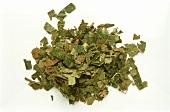 A heap of dried witch-hazel leaves (Hamamelis virginiana)