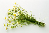 Bunch of chamomile (Matricaria chamomilla)
