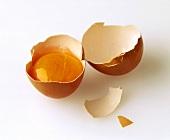 Egg Yolk in a Broken Egg Shell