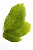 Four walnut leaves (natural remedy)