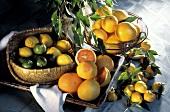 Still Life of Several Assorted Citrus Fruit