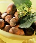 Hazelnuts, green hazelnut twig and leaves in bowl