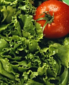 Leaf Lettuce with a Tomato
