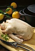 Eine rohe Ente auf Küchenbrett, Deko: Geflügelschere, Orangen