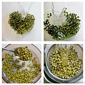 Sprouting seeds (soaking seeds, swelling, rinsing)