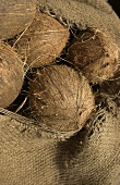 Coconuts (from the Caribbean) in jute sack