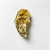 An oyster - Fines de Claires