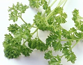 Fresh Parsley Sprigs