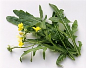 Rocket leaves and flowers