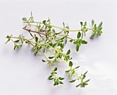 Thyme Sprigs