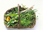 Fresh Picked Herbs in Basket with Garden Tools