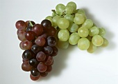 Red and green table grapes