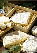 Various Brie cheeses and Camemberts