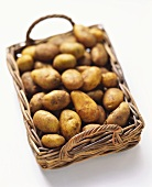 Potatoes (Italian Sieglinde) on cane tray