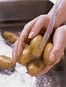 Washing potatoes (Sieglinde) under running water