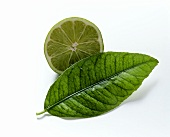 Lime half and leaf